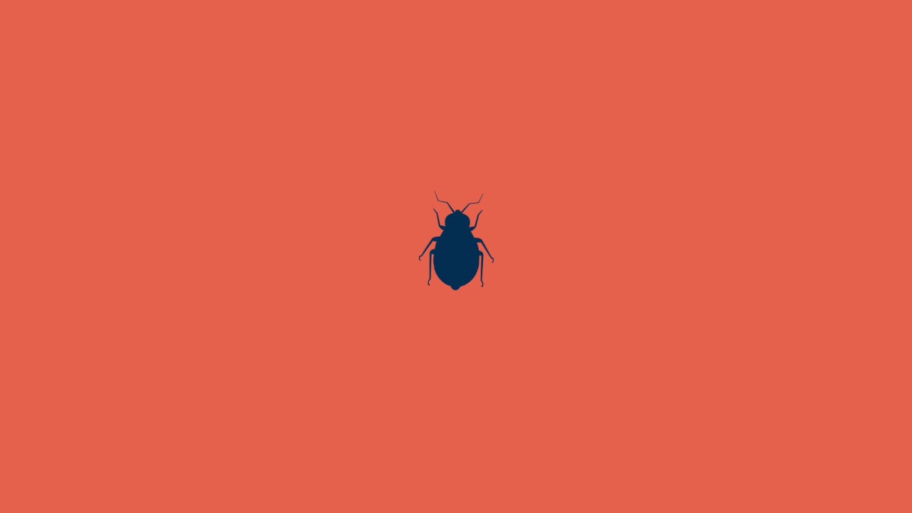 Bed Bugs Nz Youtube