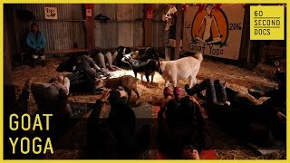 Goat Yoga // 60 Second Docs
