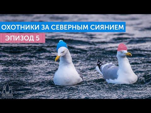 Охотники за северным сиянием. Эпизод 5: Хостел 007