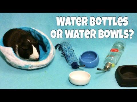Water Bottles Vs Water Bowls (for Guinea Pigs, Hamsters & Hedgehogs)