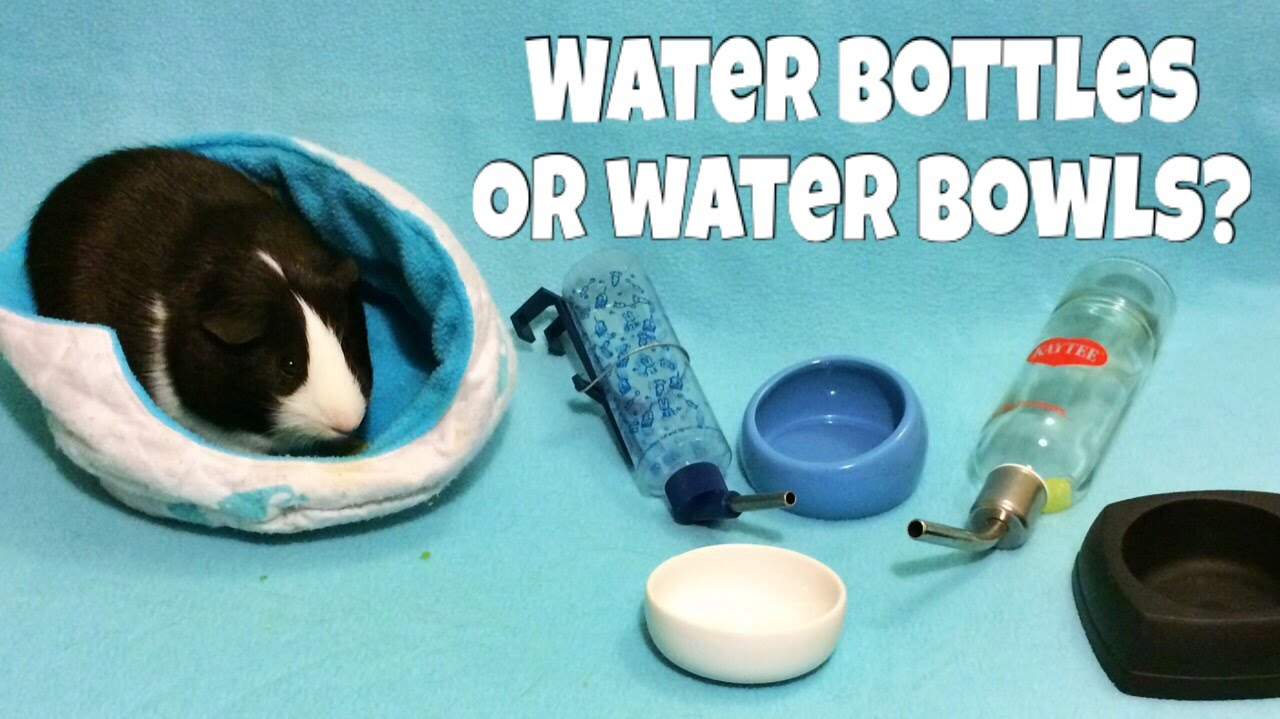 Water Bottles vs Water Bowls (for Guinea Pigs, Hamsters & Hedgehogs)