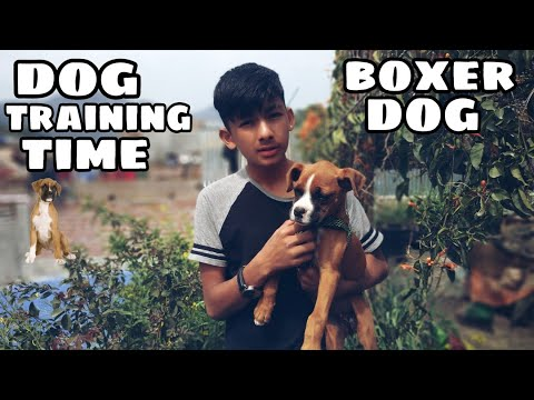 3 month's Boxer dog training in nepal ( #1 week dog training challenge)