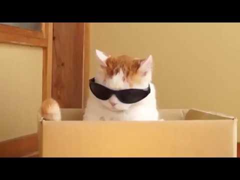 爆笑!、可愛い!、癒される!超絶面白い猫の動画まとめ