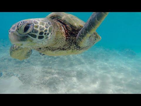 Snorkeling At Maluaka Beach, Turtle Town, Maui