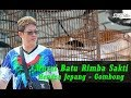 Sleman City Hall Cup  Tampil Enerjik Mb Rimba Sakti Hendra Jepang Jpn Pasrah Tak Masuk Nominasi  Mp3 - Mp4 Download
