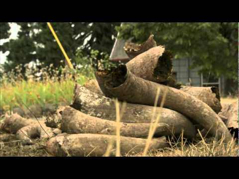 wine article Biodynamic Viticulture an introduction
