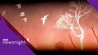 Amazon rainforest: 'Our lungs are on fire'- BBC Newsnight