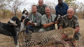 Leopard Hunting in Africa with blue-tick hounds
