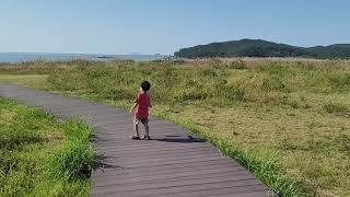 (충남/태안)신두리해안사구 / 걷기 좋은 언택트 여행지