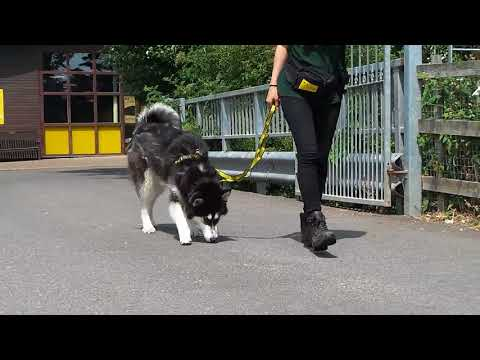 Jackson - Dogs Trust Shoreham