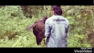 melatih elang Che Dm