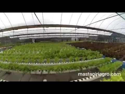 Hidroponik Nft Skala Industri Mastagiri Agro