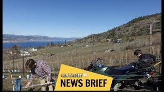 Naramata wineries adapting to crisis