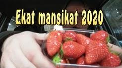 """""""Kesän"""" 2020 ekat SUOMALAISET mansikat (testaus)"""