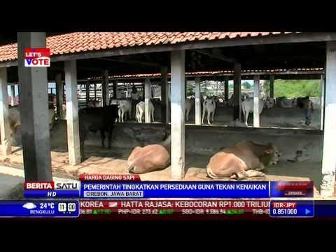 Persediaan Sapi di Rumah Pemotongan Hewan Cirebon Menipis