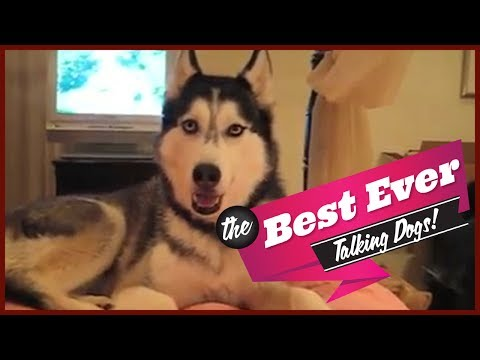 TOP 10 BEST TALKING DOGS EVER