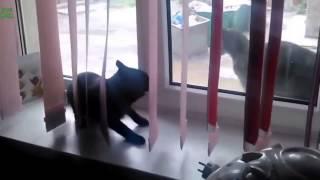 Жесть Кошки убивают друг друга драки жесткие Кошаки сошли с ума  01 01 2015