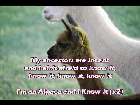 Alpaca Song
