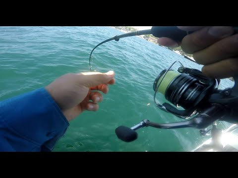 Fishing Sydney Harbour | 2019 Australia Day Weekend | Kingfish / Bonito / Bream