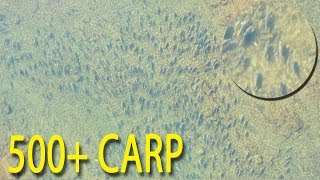 Fishing Massive Carp SWARM & Catching Flatheads with Lures
