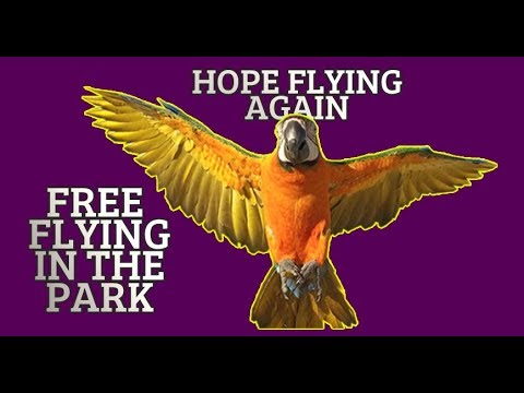 HOPE MY CATALINA MACAW IS FLYING AGAIN
