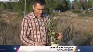 В Израиле придумали как вырастить лес в пустыне