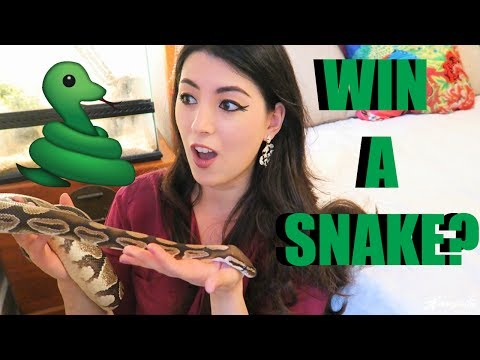 SHE WAS A PRIZE | MEET MY SNAKE | PET BALL PYTHON