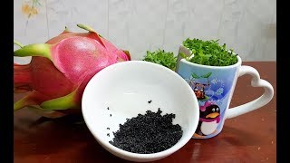 Extract the dragon fruits seeds to grow lucky grass in 2 simple steps - Lấy hạt thanh long.