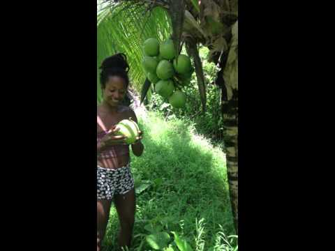 Fresh coconut water, super natural drink. Costa rica - Puerto Viejo