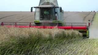 Rzepakowe Żniwa w Kombinacie Rolnym Kietrz - 2013