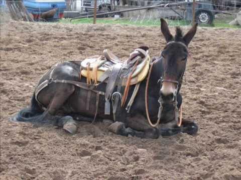 Impressive Mule