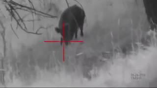 Один выстрел - один кабан. Умный цифровой прицел X-Sight(Охота с расстояния 100 метров. Видео снято на умный цифровой прицел ATN X-Sight HD день/ночь 24/7 Официальный дистриб..., 2016-06-21T08:57:46.000Z)