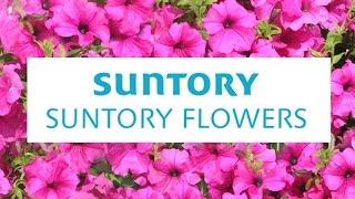 15年5月9日、宮城県石巻市で子どもたちと一緒にサフィニアの花苗を植え...