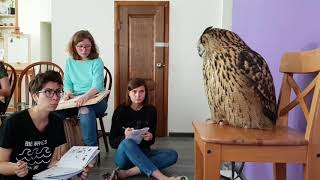 4 important reasons not to get a pet owl