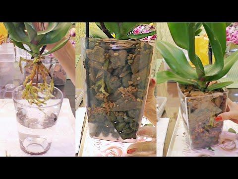 Красивая посадка орхидеи! / Меняю компоненты грунта.