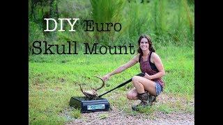 Euro Deer Skull Mount