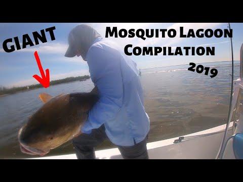 Fishing Florida's Mosquito Lagoon 2019 (Compilation)