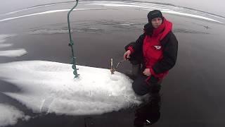 Чудо Чудское озеро д.Ветвеник в поисках рыбы от берега 2.5км
