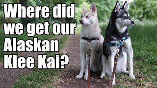 Alaskan Klee Kai Breeders | Where Did We Get Our Dogs?
