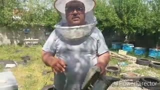 Пчелни майки sevdat yakub 16