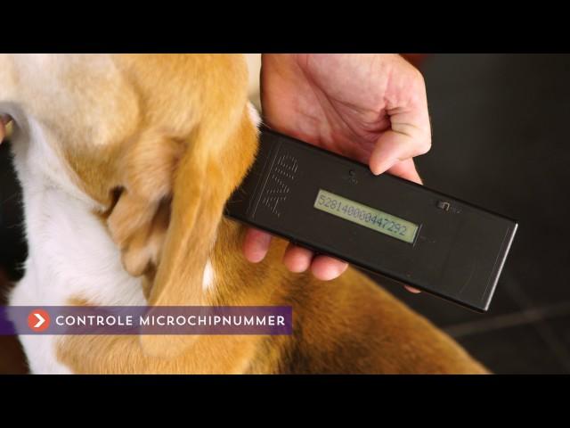 Voordeel 8: Zekerheid door DNA-controle van ouders en pups