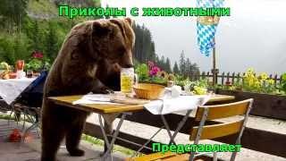 Подборка приколов с животными 2015 fun with animals USA США RUS СЕКС котики