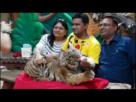 Pattaya Sriracha Tiger Zoo Thailand
