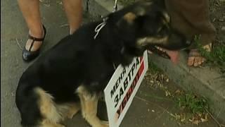В Красноярске прошёл митинг в защиту безнадзорных животных