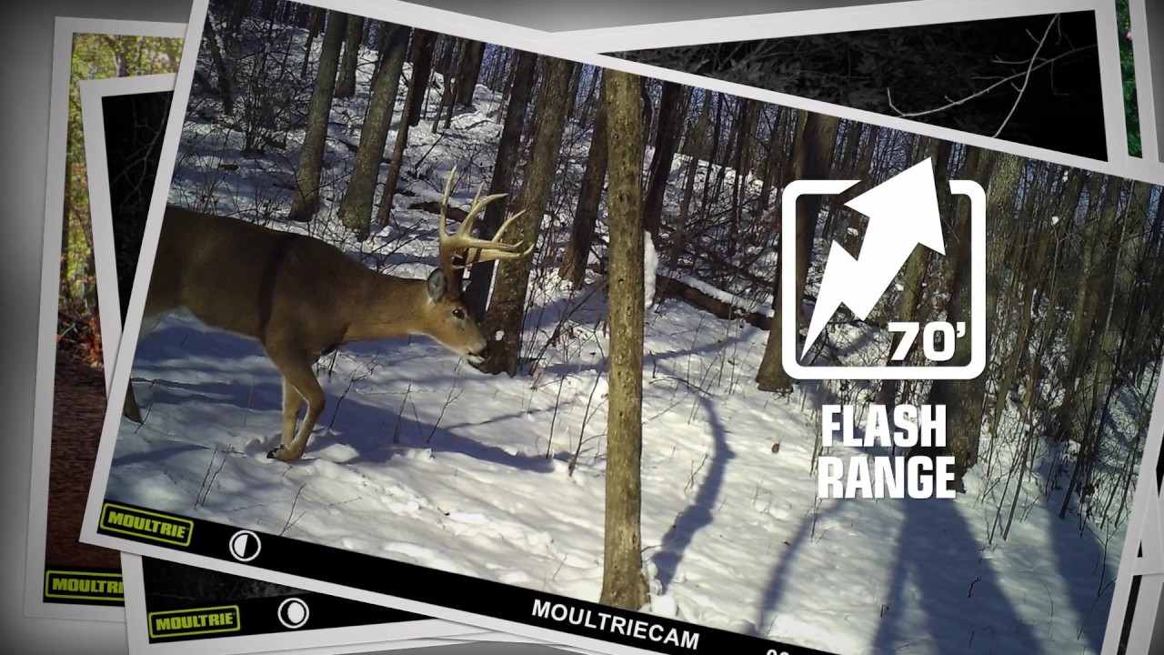 Moultrie Mobile Tutorials: How to Set Up Your Camera & MV1 ...