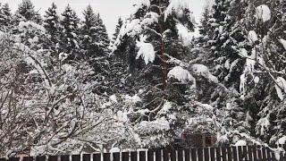 Моя дача в январе / Новогодняя Москва