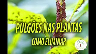 PLANTS IN THE PLANTS, HOW TO COMBAT Plant at Home