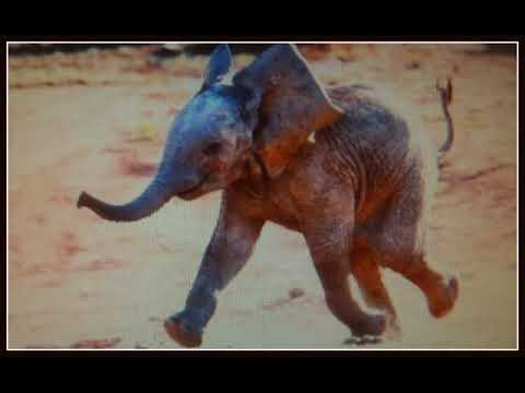 CRAZY ELEPHANT--**--**--**  GIMME GIMME GOOD LOWIN