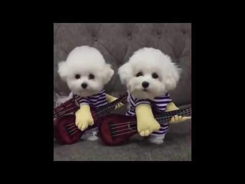 Try not to laugh   cats and dogs vines #2
