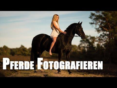 Pferde fotografieren mit Janina Kindt